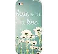 Daisy Pattern Hard Back Case for iPhone 4/4S