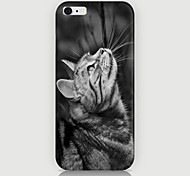 Look At the Cat Pattern Case Back Cover for Phone6 Case
