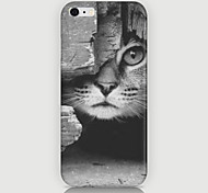o caso gatinho padrão de volta para cobrir caso phone6