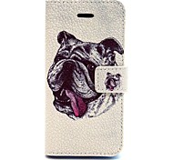 Shar Pei Pattern PU Leather Full Body Case with Card Slot and Stand for iPhone 5C