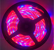 5M 5Red1Blue 300LED SMD5050 IP65 Hydroponic Systems Led Plant Grow Light Waterproof Led(DC12V)