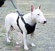 Azul ajustable de seguridad de plástico y visible en la noche perro arnés con el cinturón de seguridad del coche correa