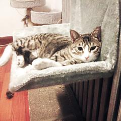 고양이 침대 애완동물 매트&패드 솔리드 따뜨하게 유지 물 세탁 가능 캐쥬얼/데일리 그레이 옐로우