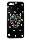 Colorful Jewel Owl modello posteriore Case for iPhone 5/5S